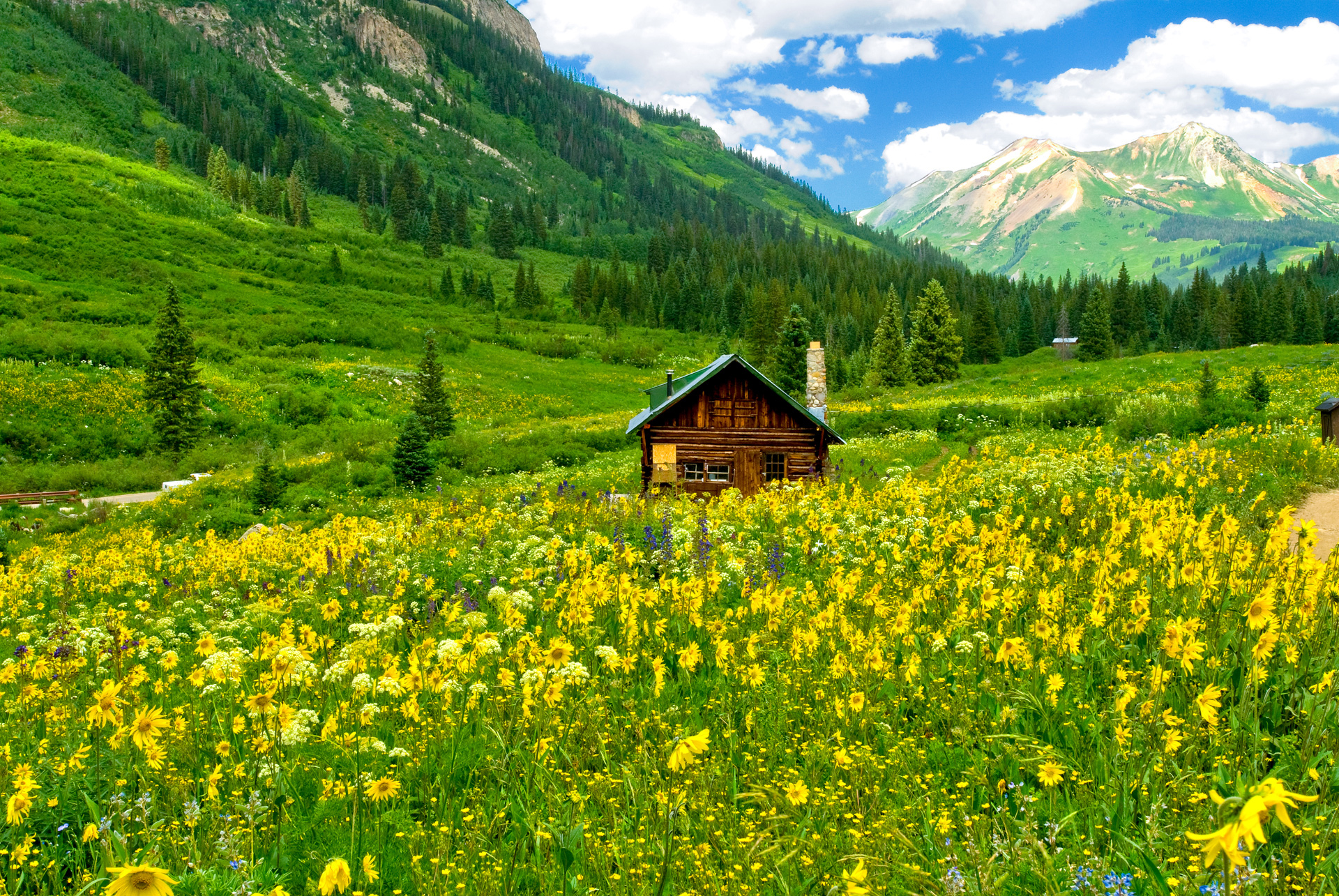 Wildflowers by Mt Crested Butte